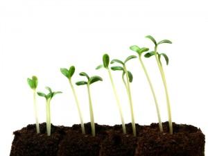 crescita nel NETWORK MLM